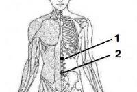 Titik akupresur sakit perut Depan