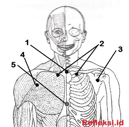 Titik akupresur batuk di dada