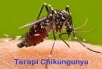Terapi chikungunya