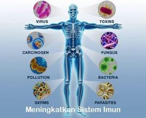 Meningkatkan sistem imun